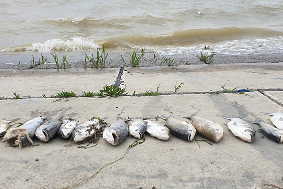 Pârâul Bicaz, poluat cu amoniac. Toţi peştii din două păstrăvării au murit
